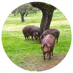 Cerdo Iberico Pata Negra